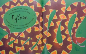 python 013 (640x480)